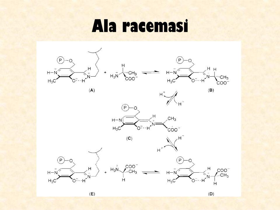Queste isomerasi sono metalloenzimi: richiedono Co 2+ o Mg 2+ La reazione è leggermente endotermica ed è reversibile: a 55°C la conversione di equilibrio è intorno al 50% Per evitare la formazione di sottoprodotti, si massimizza la velocità usando alte concentrazioni di enzima Vengono usati diversi reattori in parallelo, contenenti enzimi di diversa età, in maniera strettamente controllata (per un impianto da 1000 t si usano 20 reattori) Ledotto va accuratamente purificato (filtrazione, uso di carbone attivo, scambio ionico) per evitare deattivazione e intasamento del letto catalitico si ottiene HFCS al 42% di fruttosio (53% glucosio) oppure al 55% di fruttosio (41% glucosio) il tempo di emivita dellenzima è di più di 100 giorni.