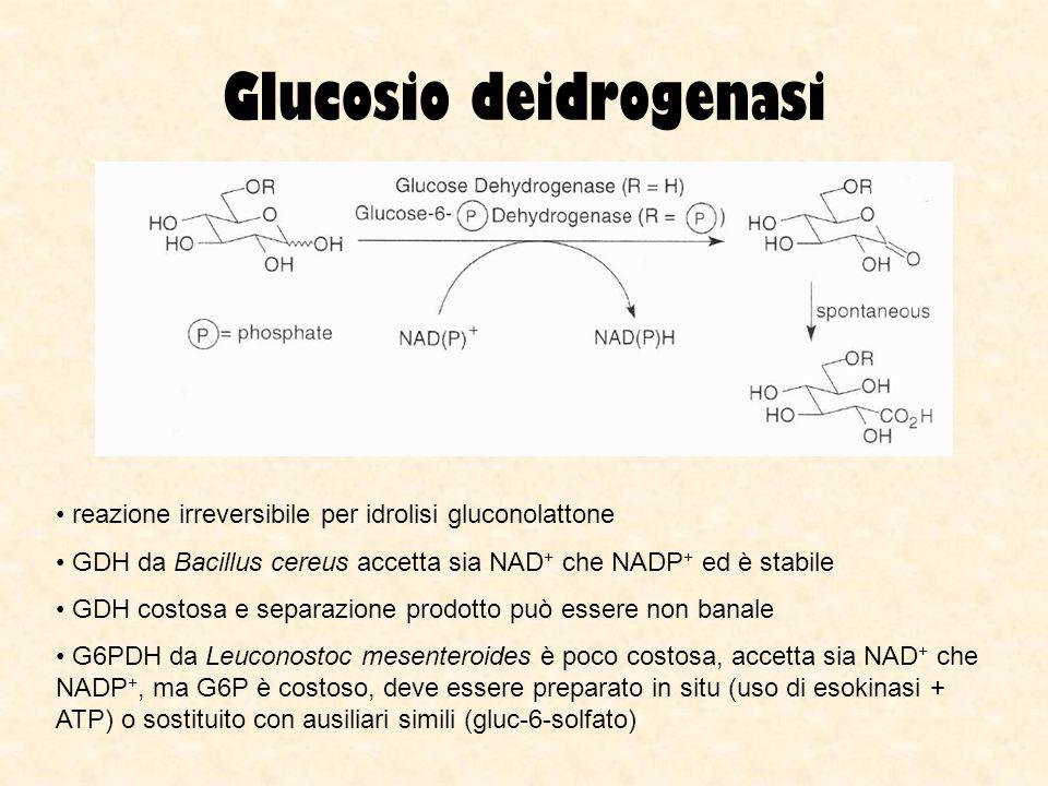 Glucosio deidrogenasi reazione irreversibile per idrolisi gluconolattone GDH da Bacillus cereus accetta sia NAD + che NADP + ed è stabile GDH costosa