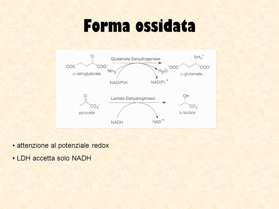 Forma ossidata attenzione al potenziale redox LDH accetta solo NADH