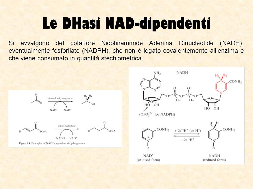 Le DHasi NAD-dipendenti Si avvalgono del cofattore Nicotinammide Adenina Dinucleotide (NADH), eventualmente fosforilato (NADPH), che non è legato cova