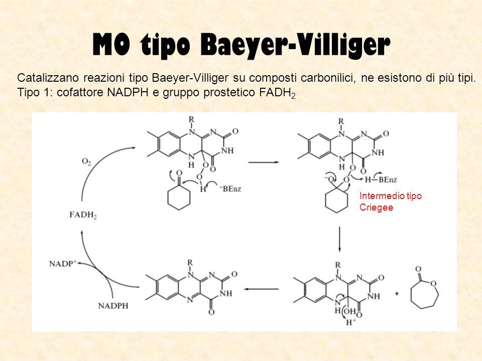 MO tipo Baeyer-Villiger Catalizzano reazioni tipo Baeyer-Villiger su composti carbonilici, ne esistono di più tipi. Tipo 1: cofattore NADPH e gruppo p