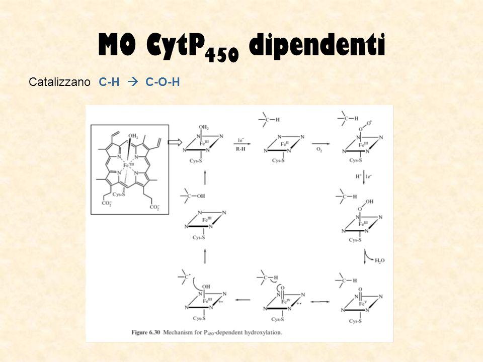 MO CytP 450 dipendenti Catalizzano C-H C-O-H