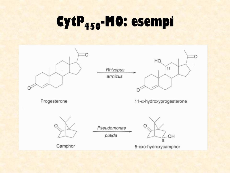 CytP 450 -MO: esempi