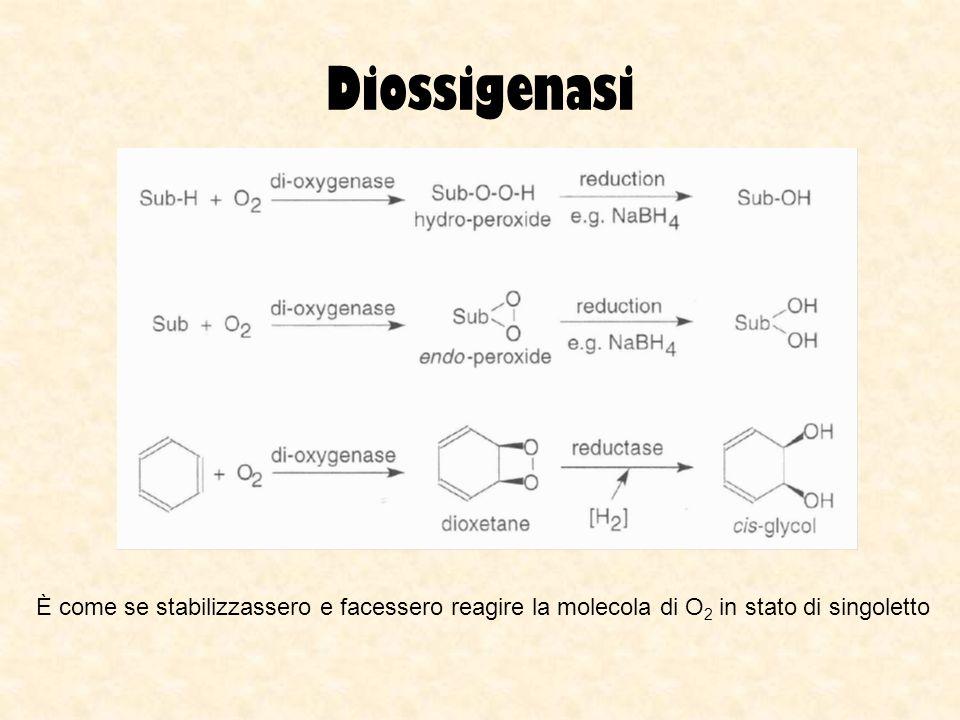 Diossigenasi È come se stabilizzassero e facessero reagire la molecola di O 2 in stato di singoletto
