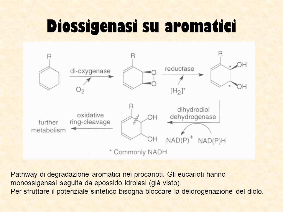 Diossigenasi su aromatici Pathway di degradazione aromatici nei procarioti. Gli eucarioti hanno monossigenasi seguita da epossido idrolasi (già visto)
