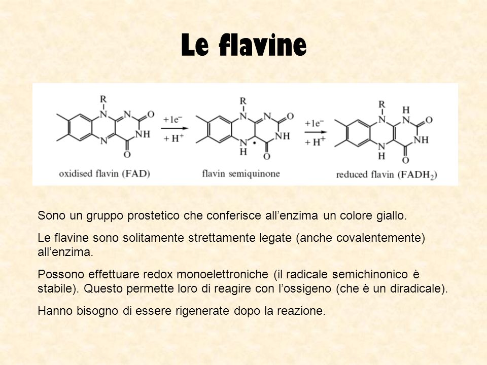 Le flavine Sono un gruppo prostetico che conferisce allenzima un colore giallo. Le flavine sono solitamente strettamente legate (anche covalentemente)