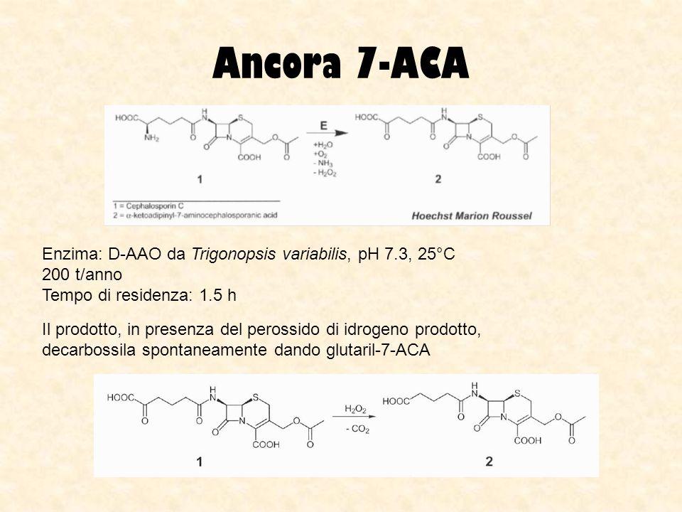 Ancora 7-ACA Enzima: D-AAO da Trigonopsis variabilis, pH 7.3, 25°C 200 t/anno Tempo di residenza: 1.5 h Il prodotto, in presenza del perossido di idro