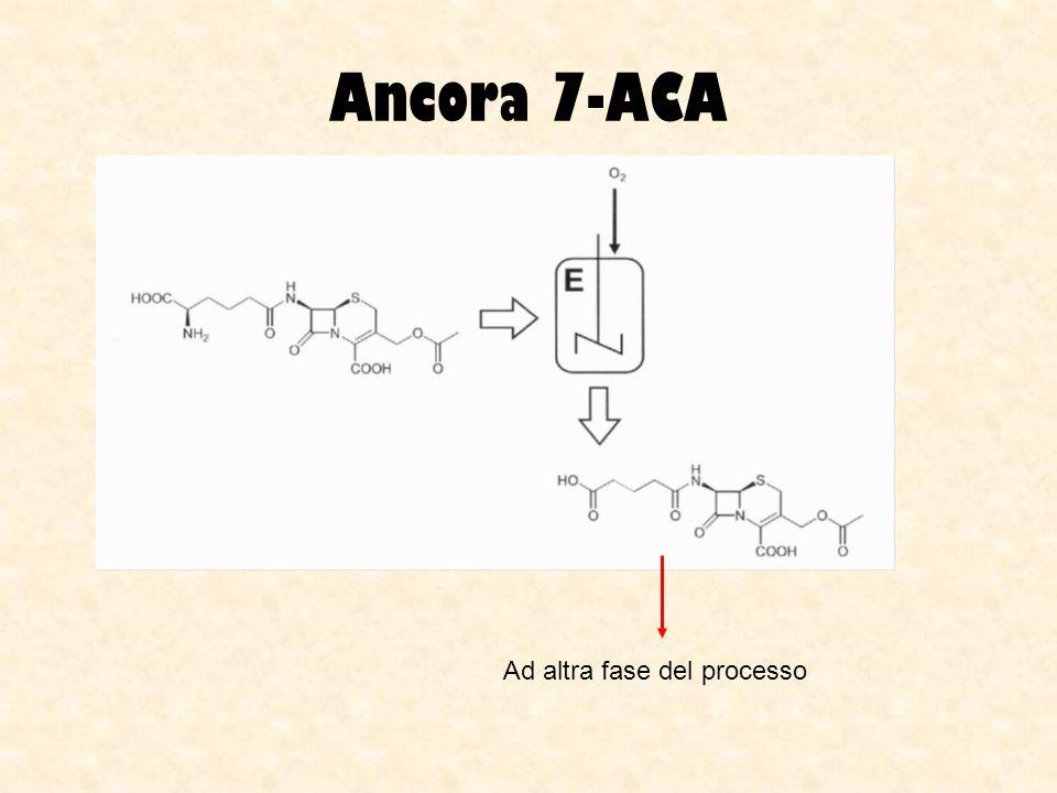 Ancora 7-ACA Glutaril amidasi (o acilasi) da E.