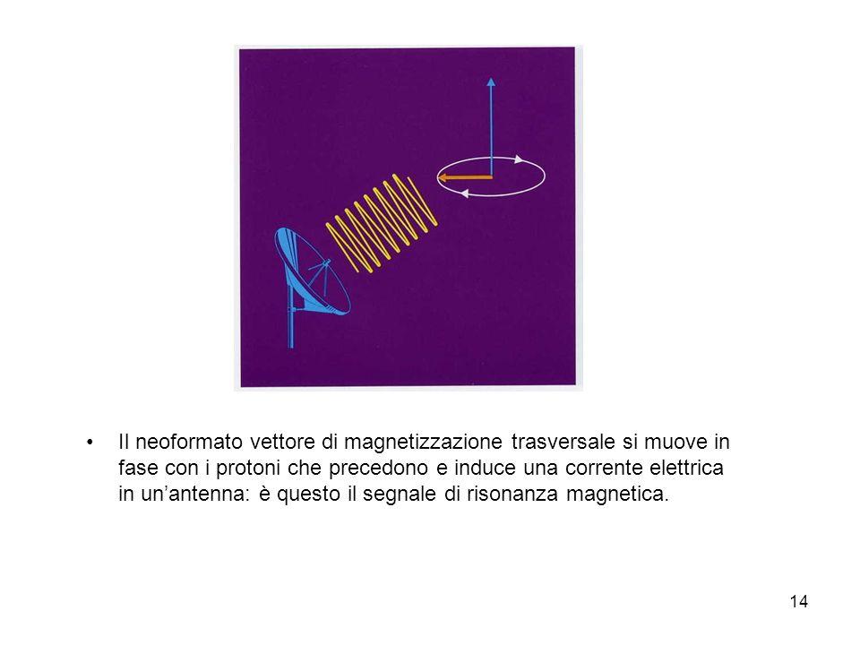 14 Il neoformato vettore di magnetizzazione trasversale si muove in fase con i protoni che precedono e induce una corrente elettrica in unantenna: è questo il segnale di risonanza magnetica.