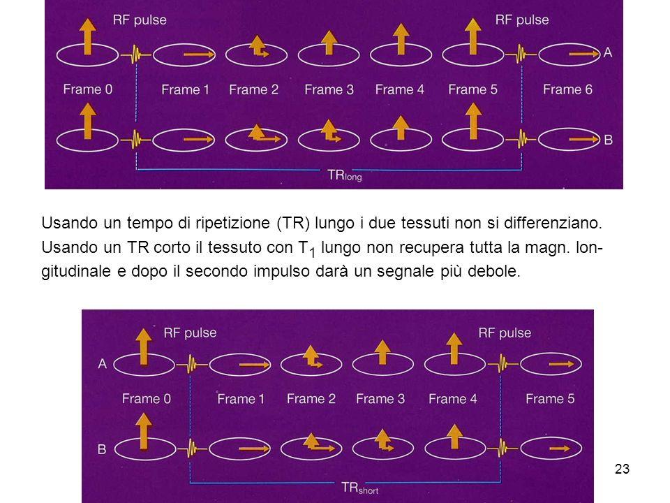 23 Usando un tempo di ripetizione (TR) lungo i due tessuti non si differenziano.