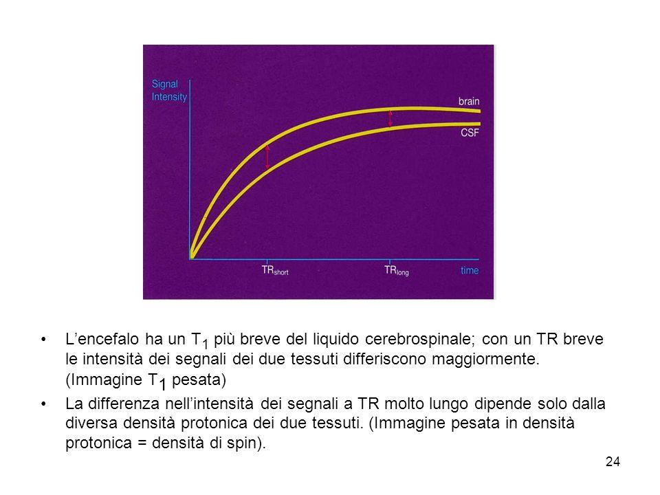 24 Lencefalo ha un T 1 più breve del liquido cerebrospinale; con un TR breve le intensità dei segnali dei due tessuti differiscono maggiormente.