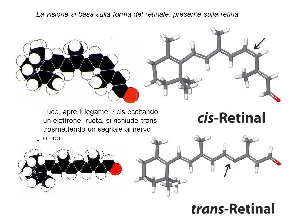 Luce, apre il legame cis eccitando un elettrone, ruota, si richiude trans trasmettendo un segnale al nervo ottico. La visione si basa sulla forma del