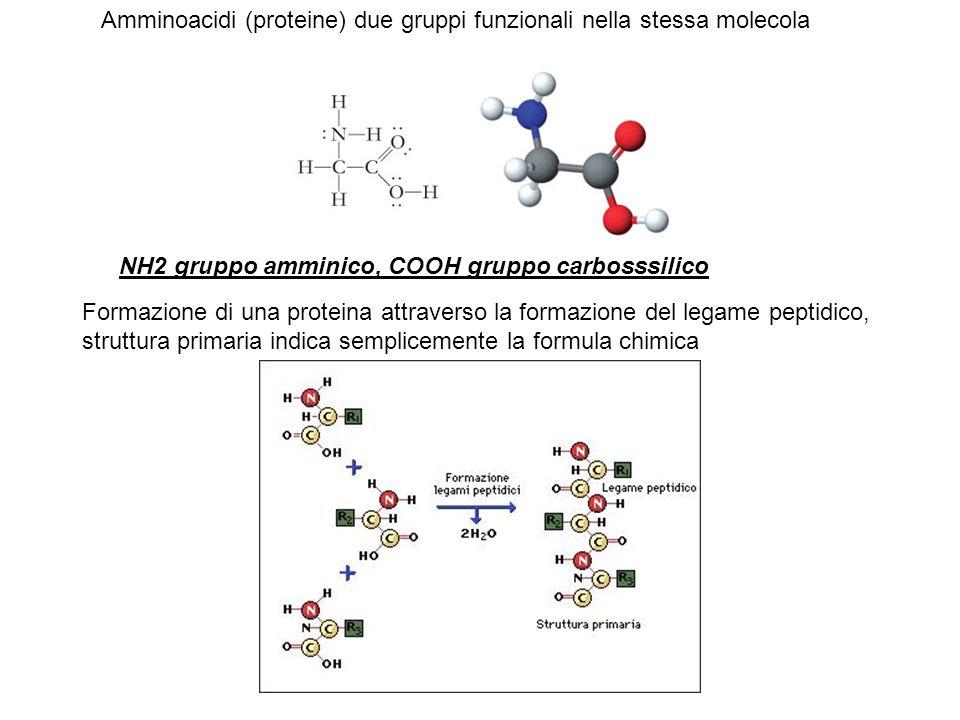 Amminoacidi (proteine) due gruppi funzionali nella stessa molecola NH2 gruppo amminico, COOH gruppo carbosssilico Formazione di una proteina attravers