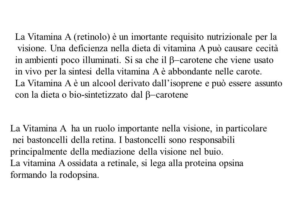 La Vitamina A (retinolo) è un imortante requisito nutrizionale per la visione.