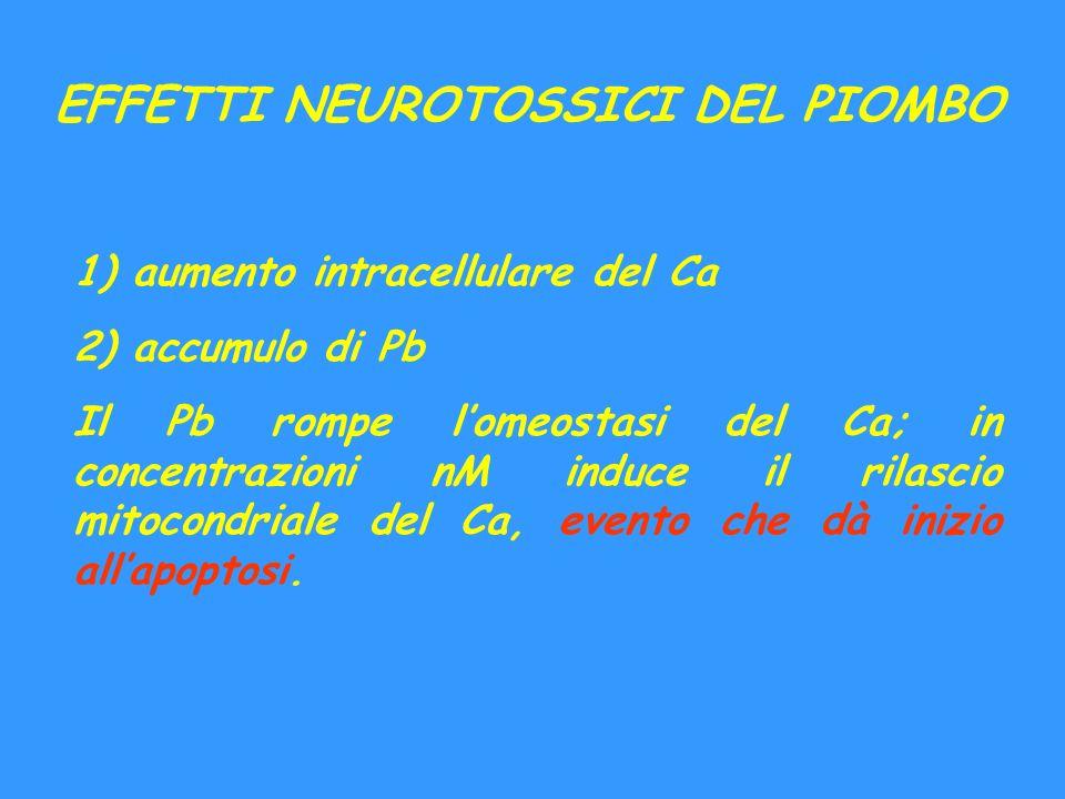 EFFETTI NEUROTOSSICI DEL PIOMBO 1) aumento intracellulare del Ca 2) accumulo di Pb Il Pb rompe lomeostasi del Ca; in concentrazioni nM induce il rilas