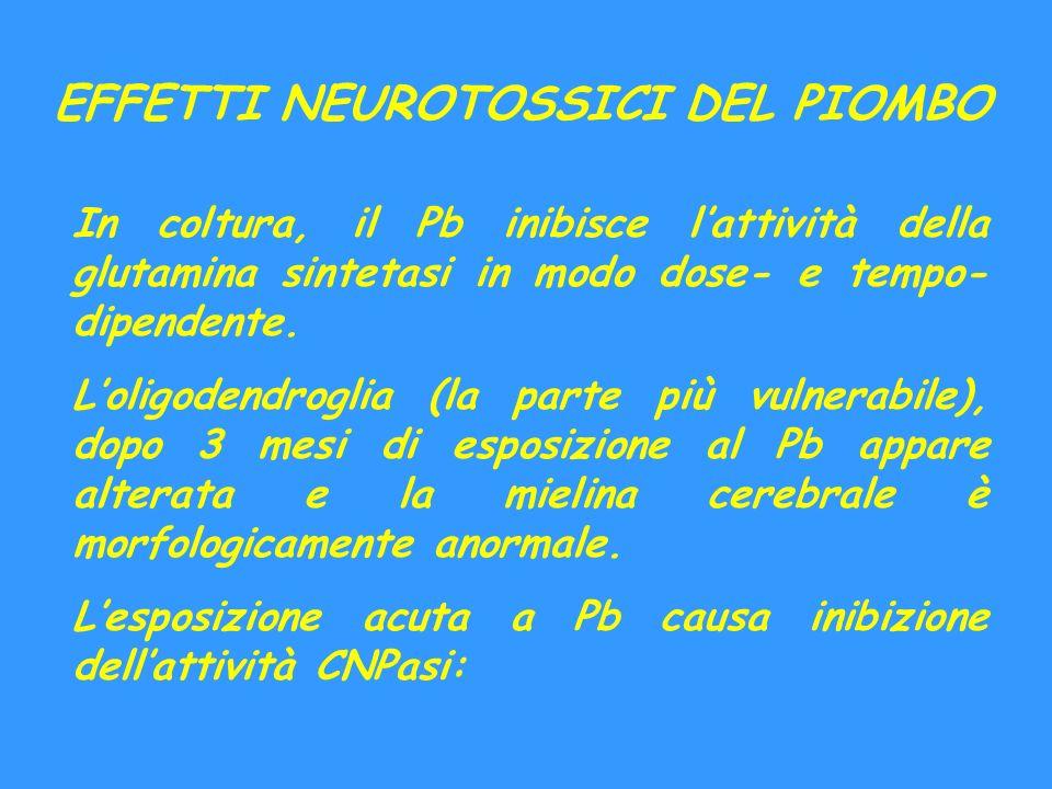 EFFETTI NEUROTOSSICI DEL PIOMBO In coltura, il Pb inibisce lattività della glutamina sintetasi in modo dose- e tempo- dipendente. Loligodendroglia (la