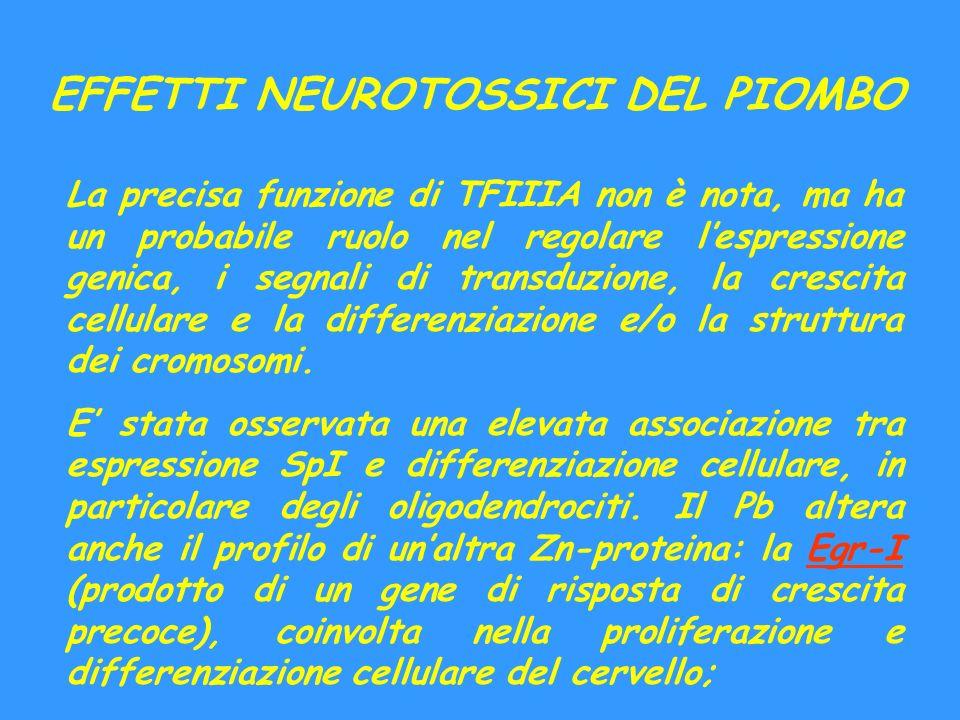 EFFETTI NEUROTOSSICI DEL PIOMBO La precisa funzione di TFIIIA non è nota, ma ha un probabile ruolo nel regolare lespressione genica, i segnali di tran