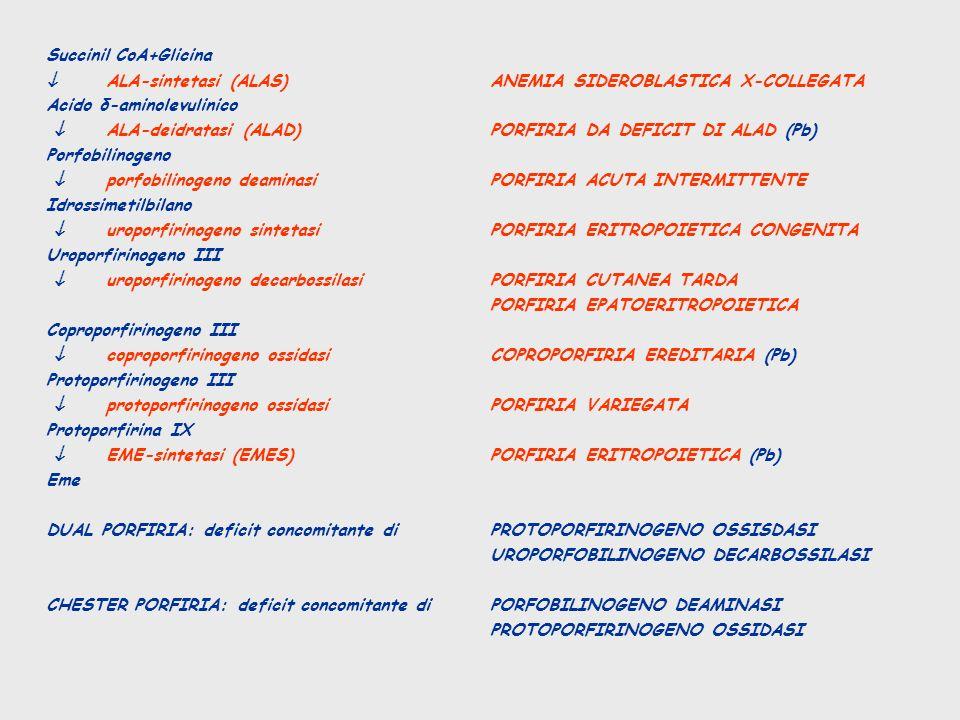 Succinil CoA+Glicina ALA-sintetasi (ALAS)ANEMIA SIDEROBLASTICA X-COLLEGATA Acido δ-aminolevulinico ALA-deidratasi (ALAD)PORFIRIA DA DEFICIT DI ALAD (P