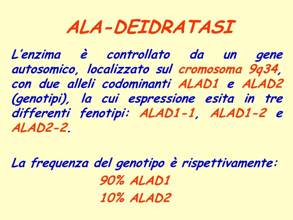 ALA-DEIDRATASI Lenzima è controllato da un gene autosomico, localizzato sul cromosoma 9q34, con due alleli codominanti ALAD1 e ALAD2 (genotipi), la cu