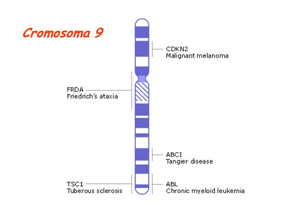 Cromosoma 9