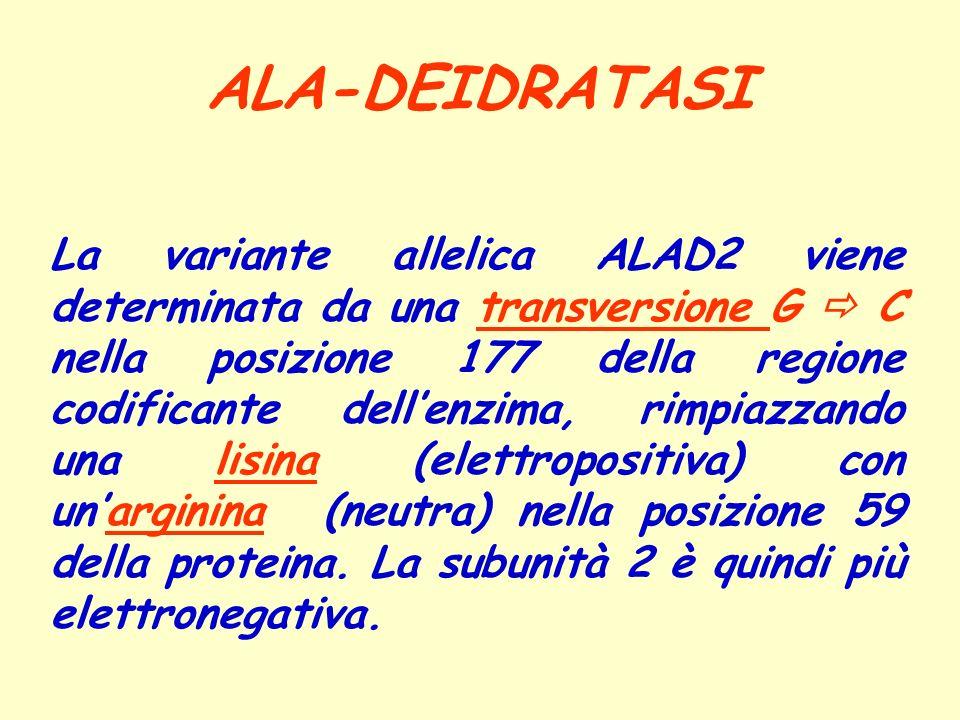 ALA-DEIDRATASI La variante allelica ALAD2 viene determinata da una transversione G C nella posizione 177 della regione codificante dellenzima, rimpiaz