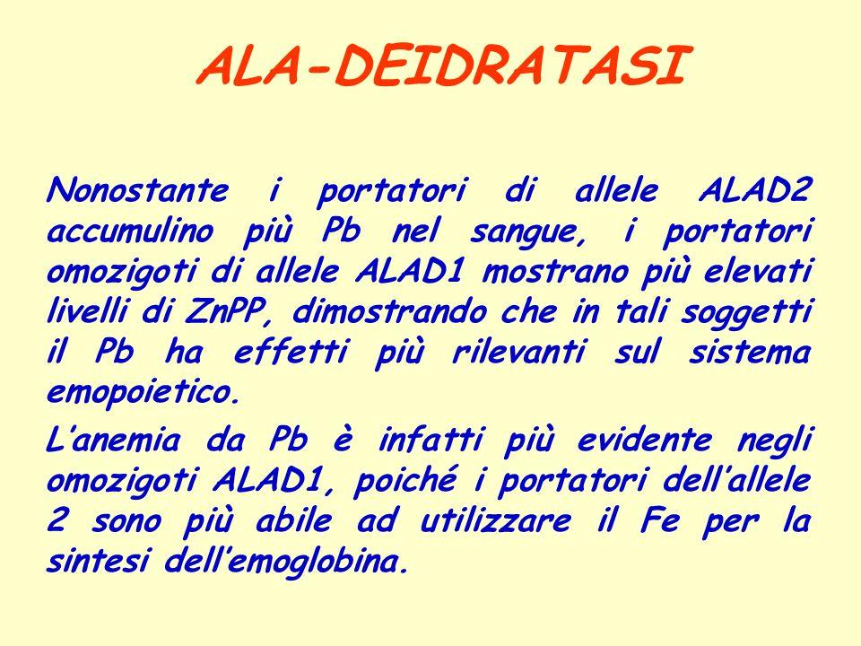 ALA-DEIDRATASI Nonostante i portatori di allele ALAD2 accumulino più Pb nel sangue, i portatori omozigoti di allele ALAD1 mostrano più elevati livelli