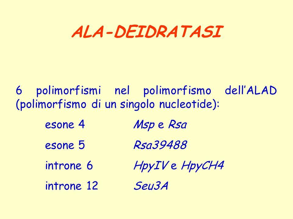 6 polimorfismi nel polimorfismo dellALAD (polimorfismo di un singolo nucleotide): esone 4Msp e Rsa esone 5Rsa39488 introne 6HpyIV e HpyCH4 introne 12S