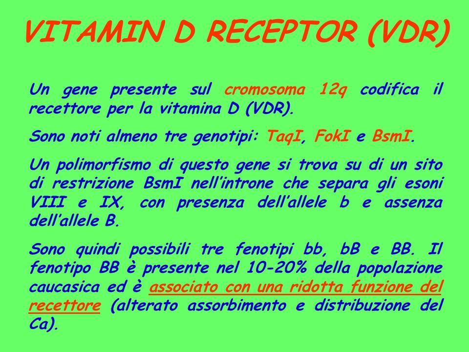 VITAMIN D RECEPTOR (VDR) Un gene presente sul cromosoma 12q codifica il recettore per la vitamina D (VDR). Sono noti almeno tre genotipi: TaqI, FokI e