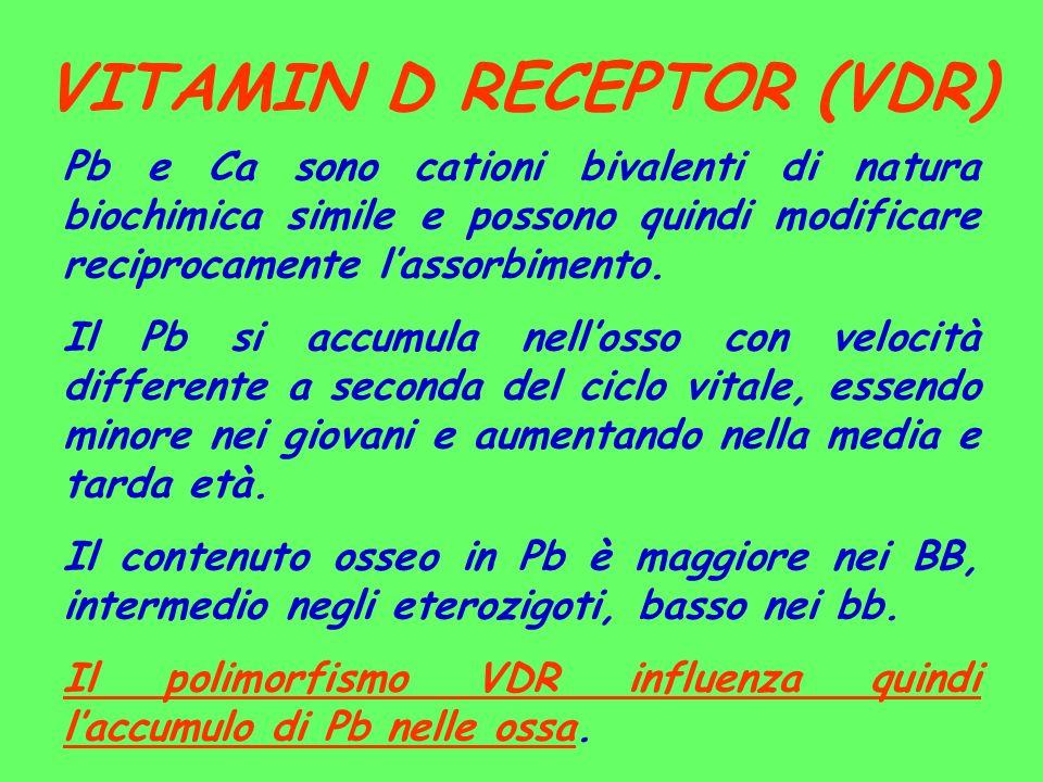 VITAMIN D RECEPTOR (VDR) Pb e Ca sono cationi bivalenti di natura biochimica simile e possono quindi modificare reciprocamente lassorbimento. Il Pb si