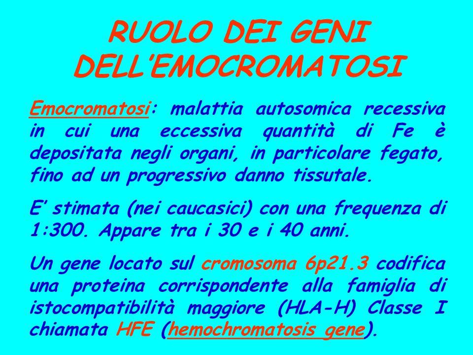 RUOLO DEI GENI DELLEMOCROMATOSI Emocromatosi: malattia autosomica recessiva in cui una eccessiva quantità di Fe è depositata negli organi, in particol