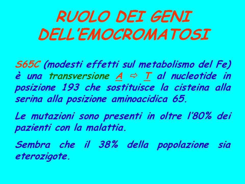 RUOLO DEI GENI DELLEMOCROMATOSI S65C (modesti effetti sul metabolismo del Fe) è una transversione A T al nucleotide in posizione 193 che sostituisce l