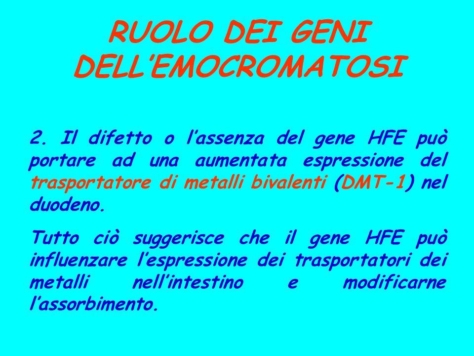 RUOLO DEI GENI DELLEMOCROMATOSI 2. Il difetto o lassenza del gene HFE può portare ad una aumentata espressione del trasportatore di metalli bivalenti