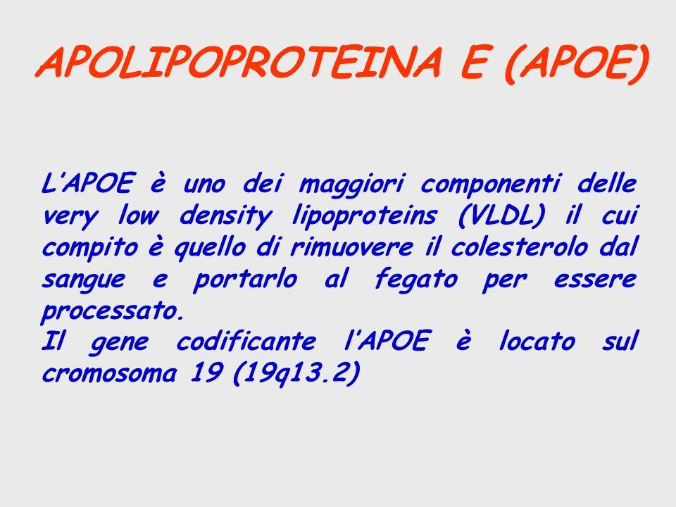 APOLIPOPROTEINA E (APOE) LAPOE è uno dei maggiori componenti delle very low density lipoproteins (VLDL) il cui compito è quello di rimuovere il colest