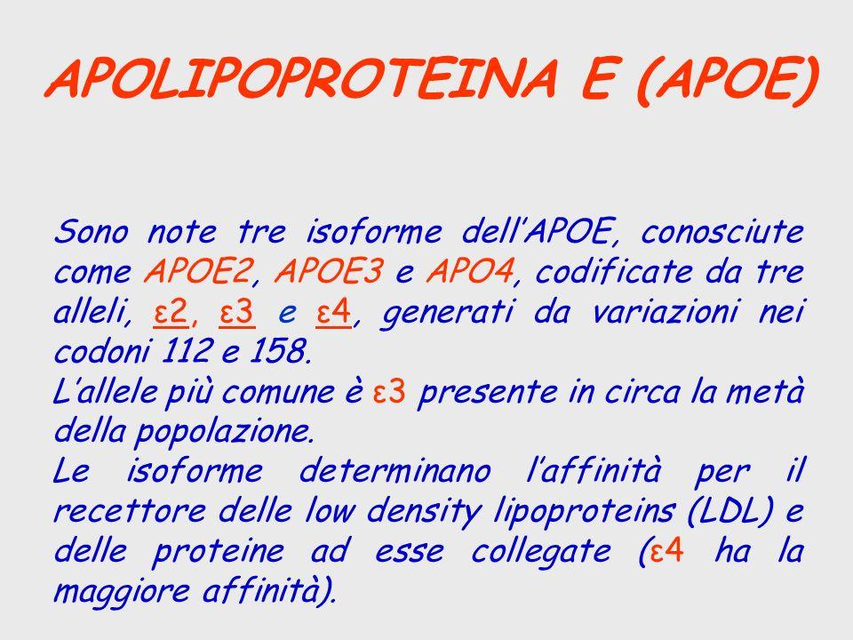 APOLIPOPROTEINA E (APOE) Sono note tre isoforme dellAPOE, conosciute come APOE2, APOE3 e APO4, codificate da tre alleli, ε2, ε3 e ε4, generati da vari