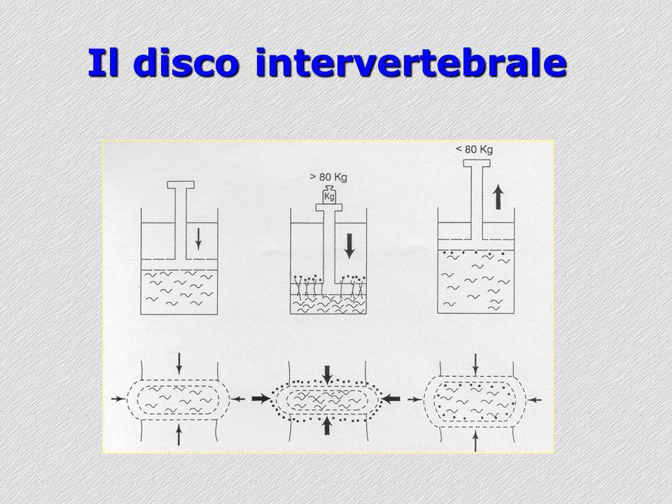 Il disco intervertebrale