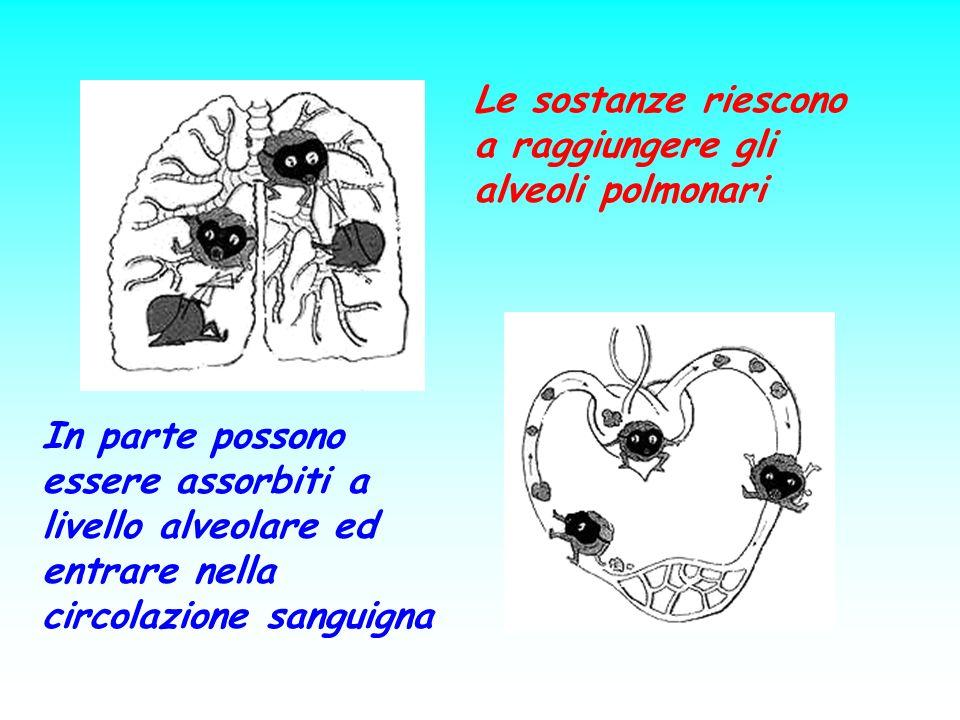 Le sostanze riescono a raggiungere gli alveoli polmonari In parte possono essere assorbiti a livello alveolare ed entrare nella circolazione sanguigna