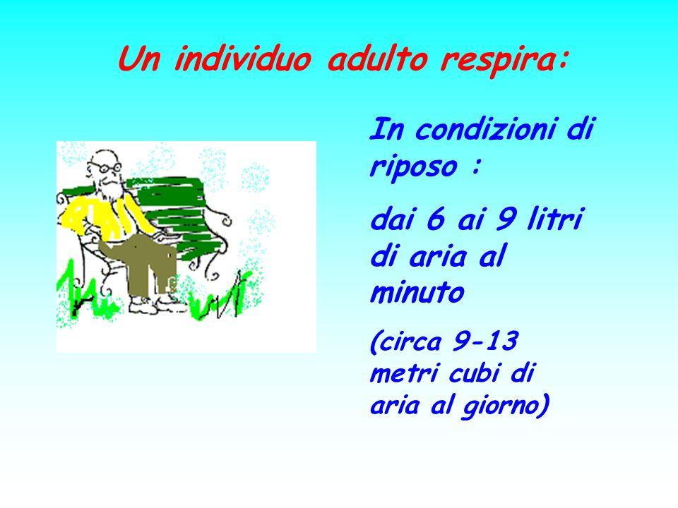 Un individuo adulto respira: In condizioni di riposo : dai 6 ai 9 litri di aria al minuto (circa 9-13 metri cubi di aria al giorno)