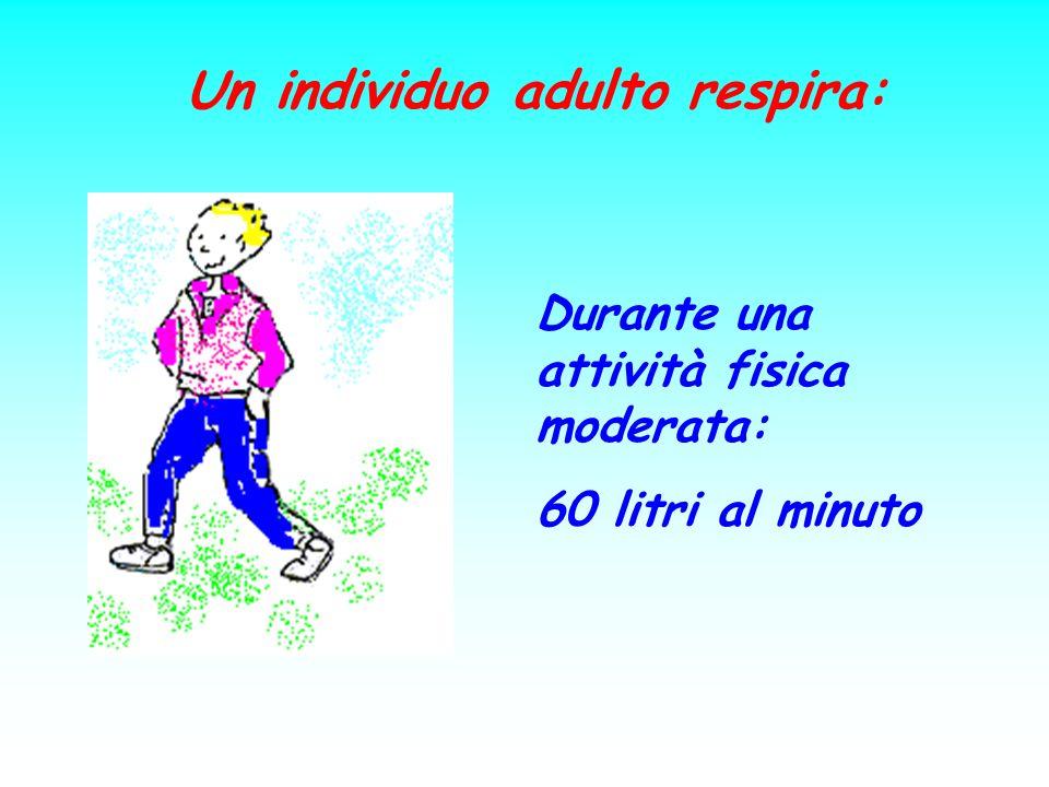 Un individuo adulto respira: Durante una attività fisica moderata: 60 litri al minuto