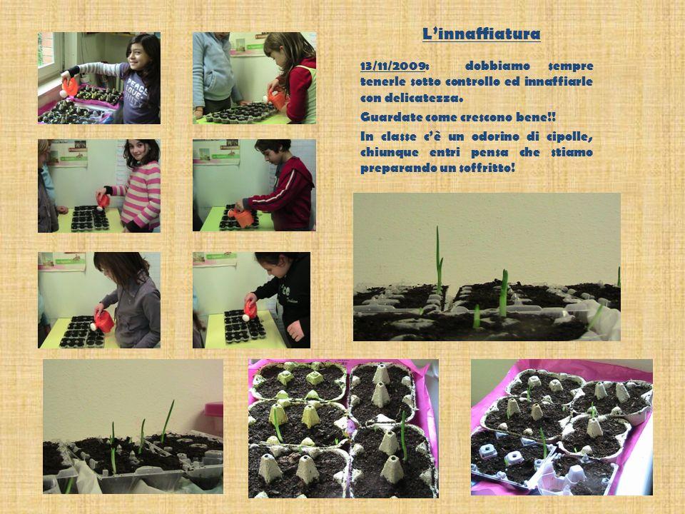 Linnaffiatura 13/11/2009: dobbiamo sempre tenerle sotto controllo ed innaffiarle con delicatezza.