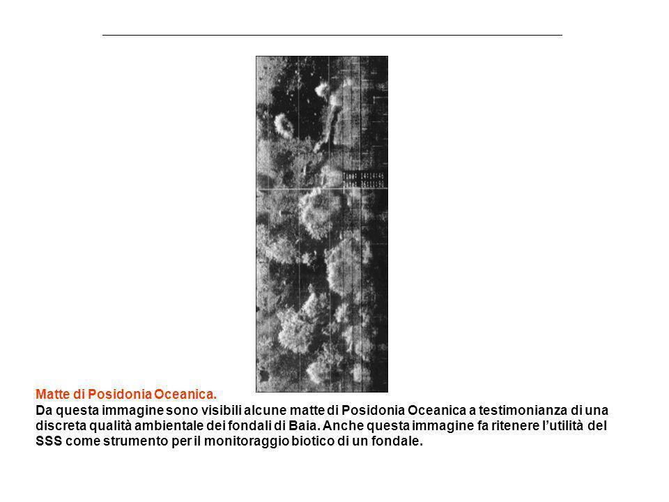Matte di Posidonia Oceanica. Da questa immagine sono visibili alcune matte di Posidonia Oceanica a testimonianza di una discreta qualità ambientale de