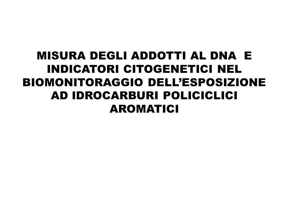 MISURA DEGLI ADDOTTI AL DNA E INDICATORI CITOGENETICI NEL BIOMONITORAGGIO DELLESPOSIZIONE AD IDROCARBURI POLICICLICI AROMATICI