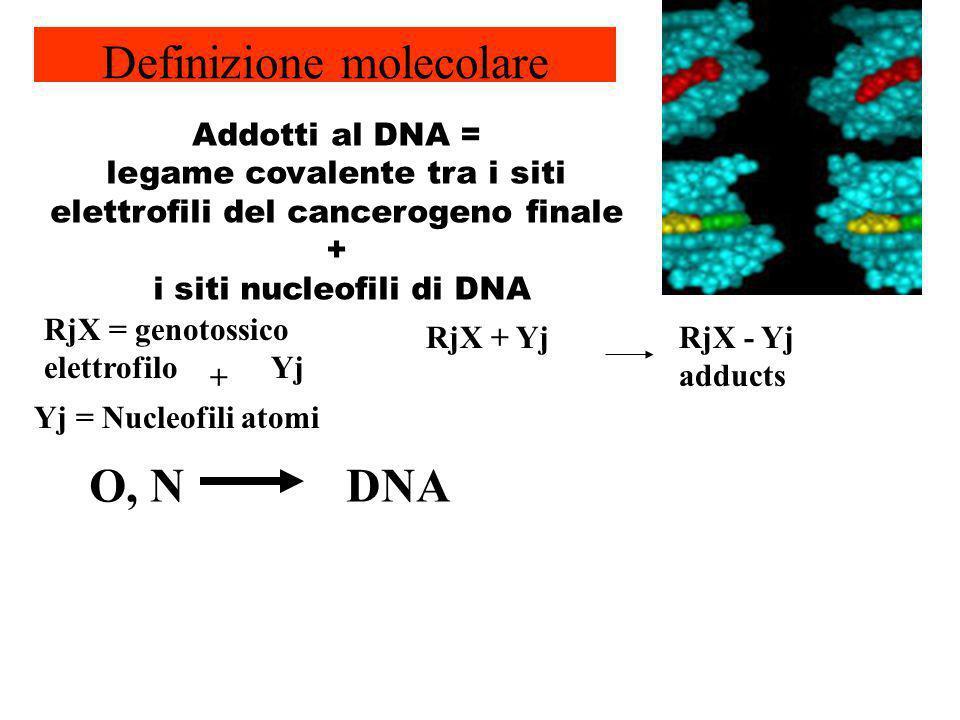 RjX = genotossico elettrofilo Yj Yj = Nucleofili atomi O, NDNA + Addotti al DNA = legame covalente tra i siti elettrofili del cancerogeno finale + i s