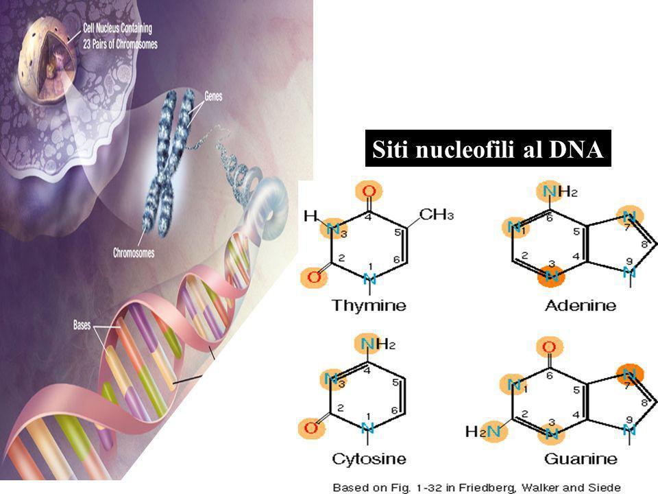Siti nucleofili al DNA