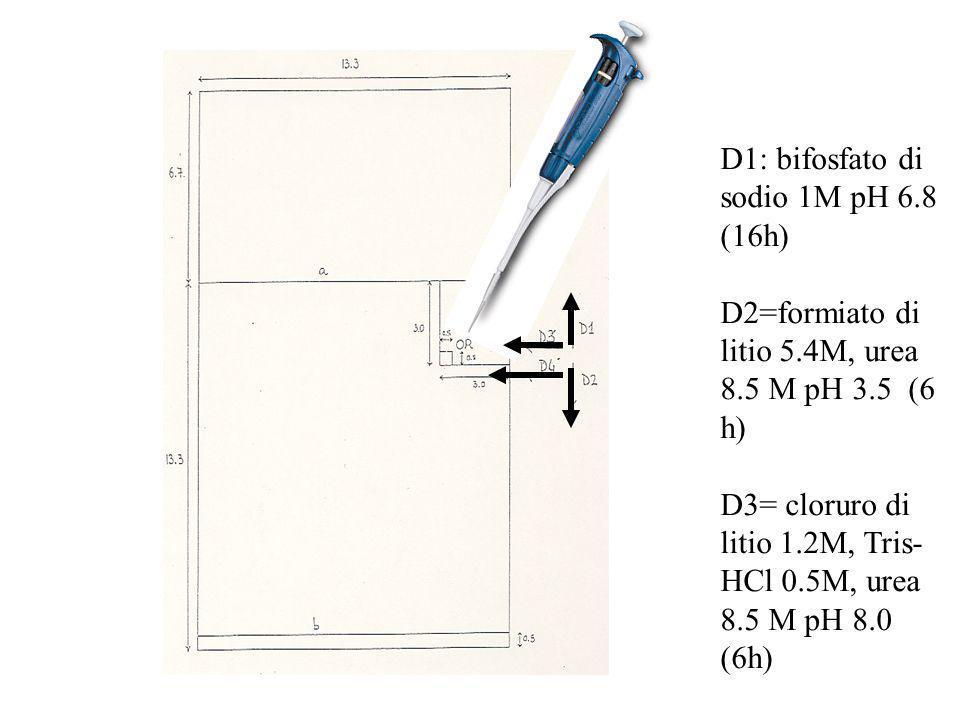 D1: bifosfato di sodio 1M pH 6.8 (16h) D2=formiato di litio 5.4M, urea 8.5 M pH 3.5 (6 h) D3= cloruro di litio 1.2M, Tris- HCl 0.5M, urea 8.5 M pH 8.0