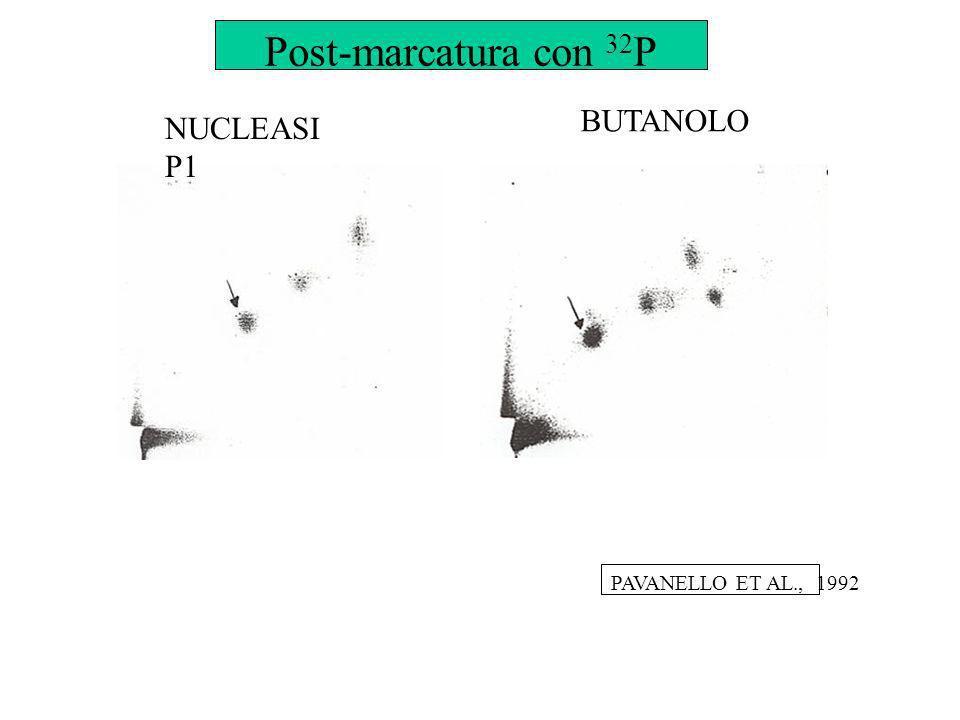 NUCLEASI P1 BUTANOLO PAVANELLO ET AL., 1992 Post-marcatura con 32 P