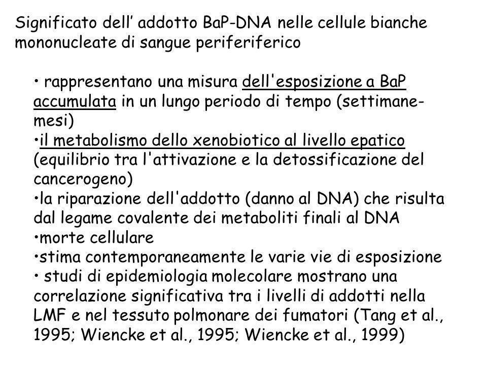 rappresentano una misura dell'esposizione a BaP accumulata in un lungo periodo di tempo (settimane- mesi) il metabolismo dello xenobiotico al livello
