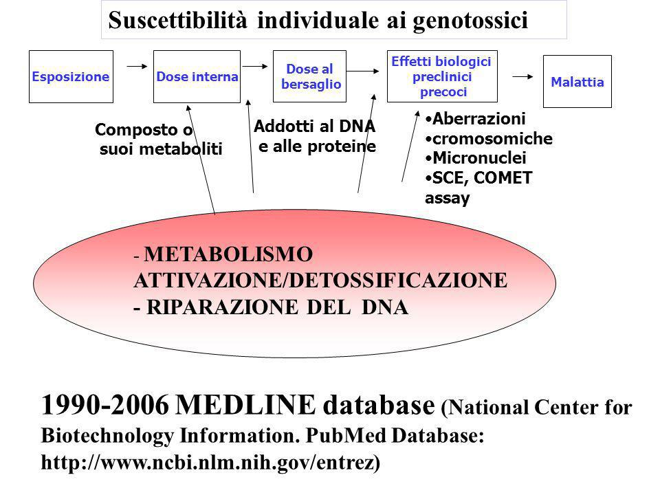 EsposizioneDose interna Dose al bersaglio Effetti biologici preclinici precoci Malattia Composto o suoi metaboliti Addotti al DNA e alle proteine Aberrazioni cromosomiche Micronuclei SCE, COMET assay - METABOLISMO ATTIVAZIONE/DETOSSIFICAZIONE - RIPARAZIONE DEL DNA 1990-2006 MEDLINE database (National Center for Biotechnology Information.