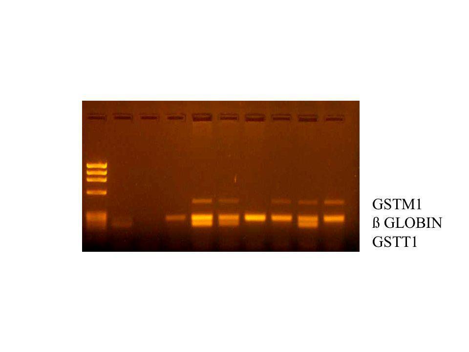 GSTM1 ß GLOBIN GSTT1