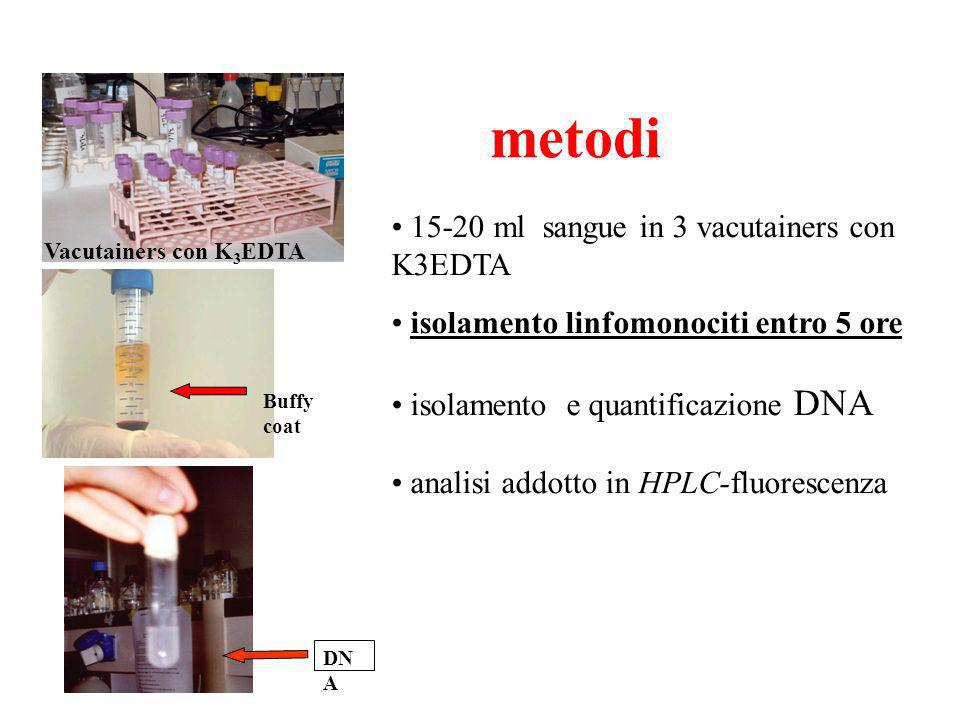 Vacutainers con K 3 EDTA 15-20 ml sangue in 3 vacutainers con K3EDTA isolamento linfomonociti entro 5 ore isolamento e quantificazione DNA analisi addotto in HPLC-fluorescenza metodi DN A Buffy coat