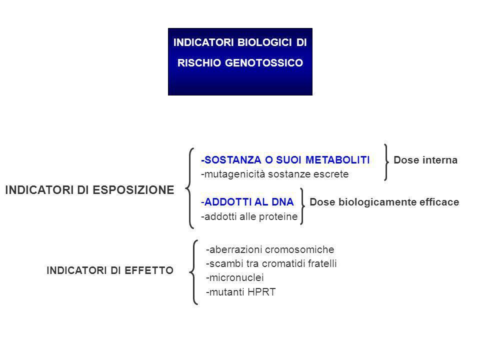INDICATORI BIOLOGICI DI RISCHIO GENOTOSSICO -SOSTANZA O SUOI METABOLITI Dose interna -mutagenicità sostanze escrete -ADDOTTI AL DNA Dose biologicament